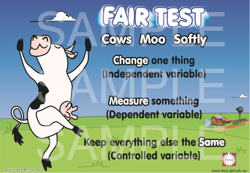 staq cows moo softly posters